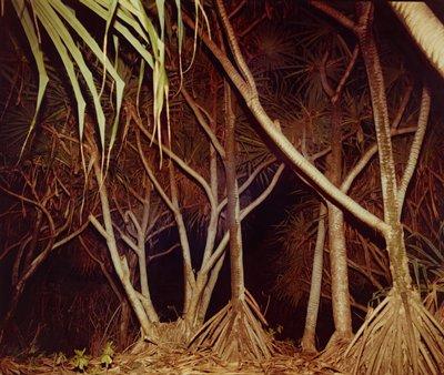 Hawaii VII