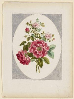 Flower Print No. 21: Damask Rose, No. 1; Rose de Meux, No. 2