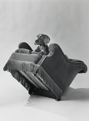 dog lying on a chair with fringed bottom, tilted slightly backward; seen from PL side, 3/4 view, from front