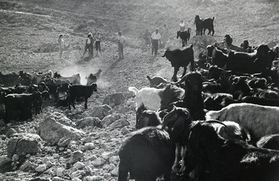 herd of goats in foreground; group of people behind; rocky landscape