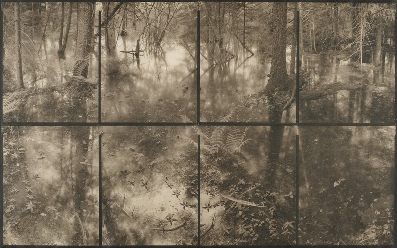 forest view with trees, ferns, plants; standing water; black lines separating image into eight sections