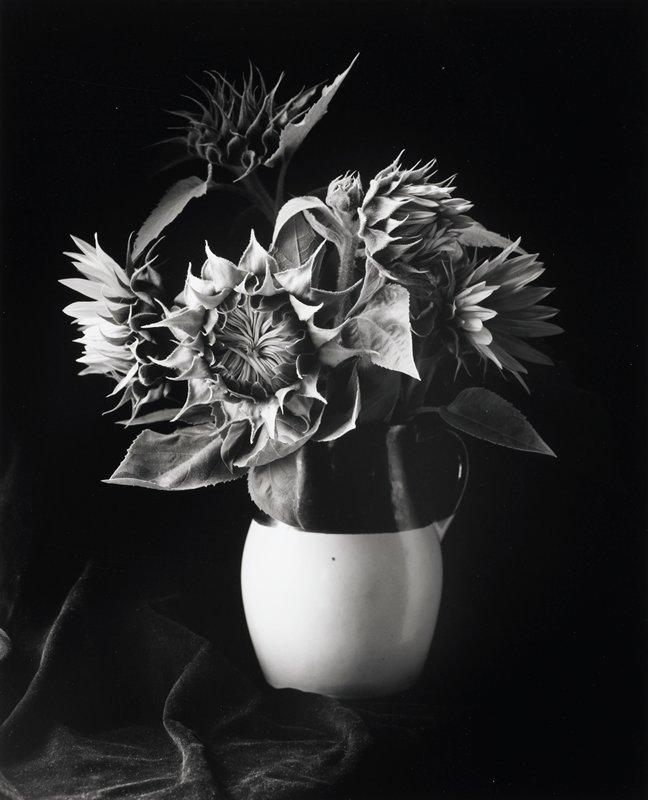 pitcher of sunflowers; white bottom 2/3, dark top
