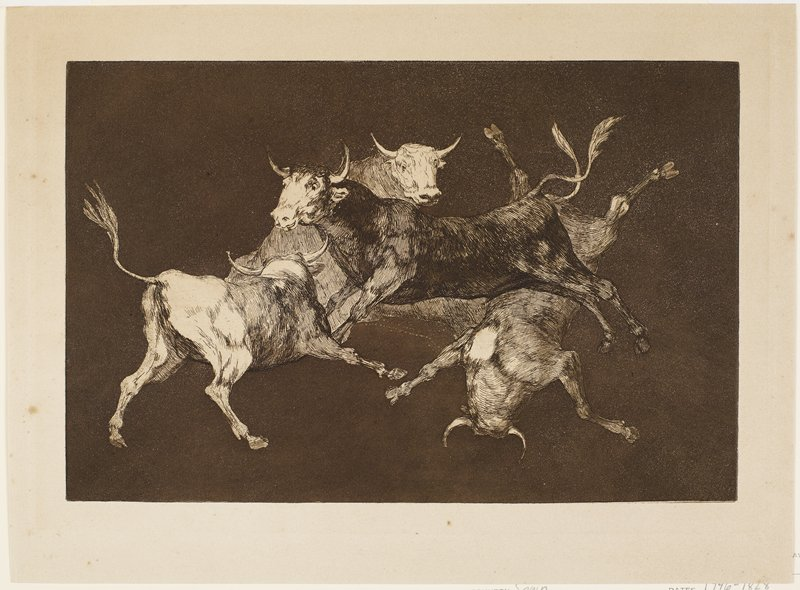 Four bulls with legs splaying, seemingly superimposed on top of each other; reddish-brown ink on tan paper; plain dark ground. Unsigned