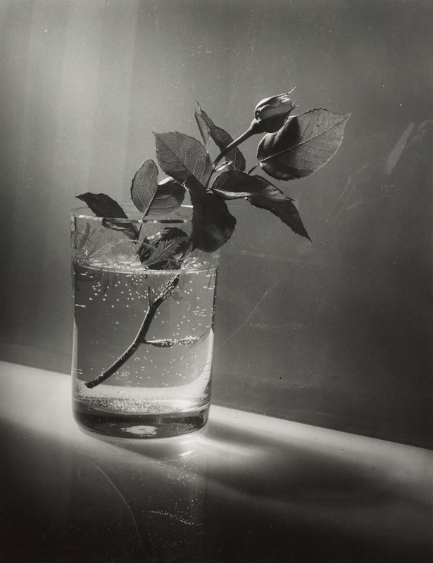rosebud on stem in glass with water; glass has etched foliate design at rim