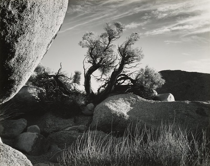 gnarled tree at center; sandy rock formations at center and left, with large rounded rock formation at top left edge; striated clouds in sky, URQ and top center