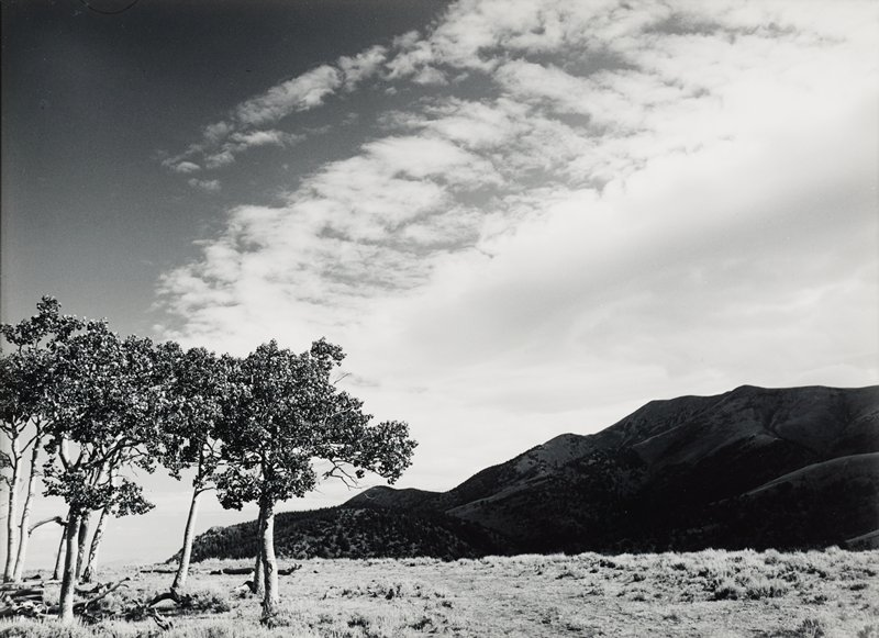 dark tree-covered mountains at right in distance; flat land in foreground with small cluster of trees in LLC; clouds in sky; low horizon line