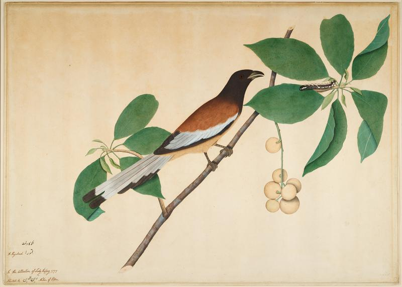 image of a brown and black bird sitting on a branch looking at a caterpillar; dark brown and gold frame with glass
