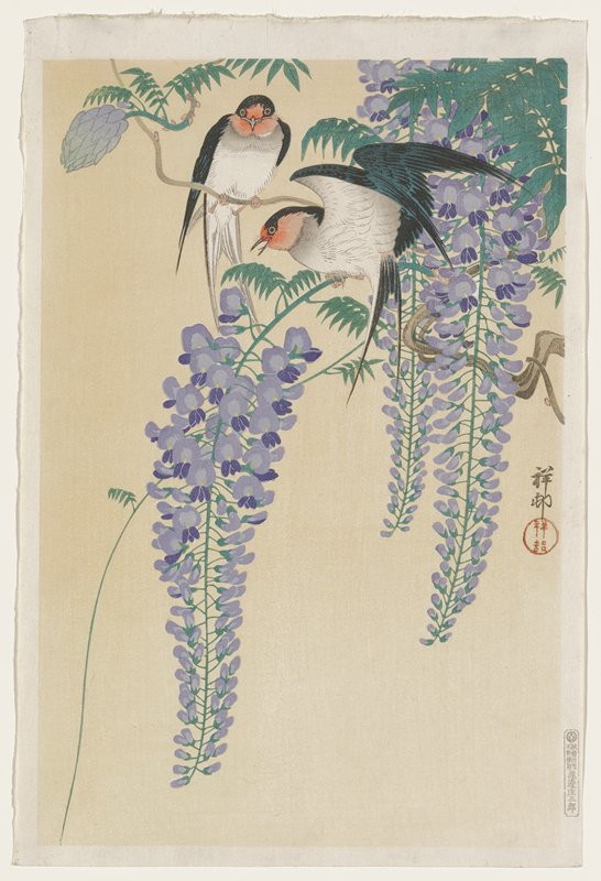pair of black birds with red faces and white underbodies perched on branch of blooming purple wisteria; yellow ground