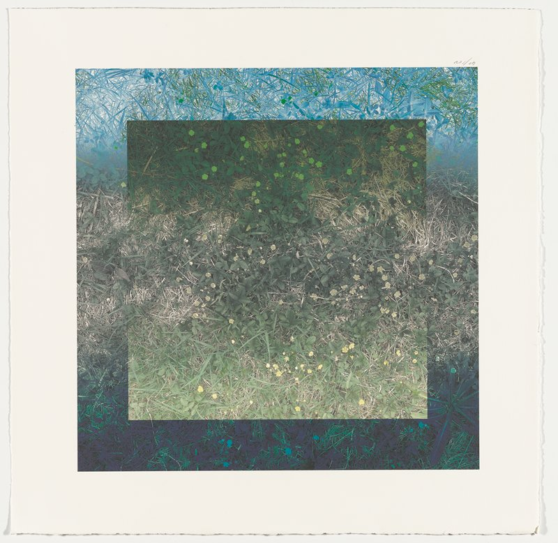 unsigned; photographic image of tiny flowers and grasses with manipulated colors; inner square with horizontal band of black and white at center, greenish tones at bottom and light, more natural colors at top; outer square with blue and green grasses at bottom and purple, green and blue at top