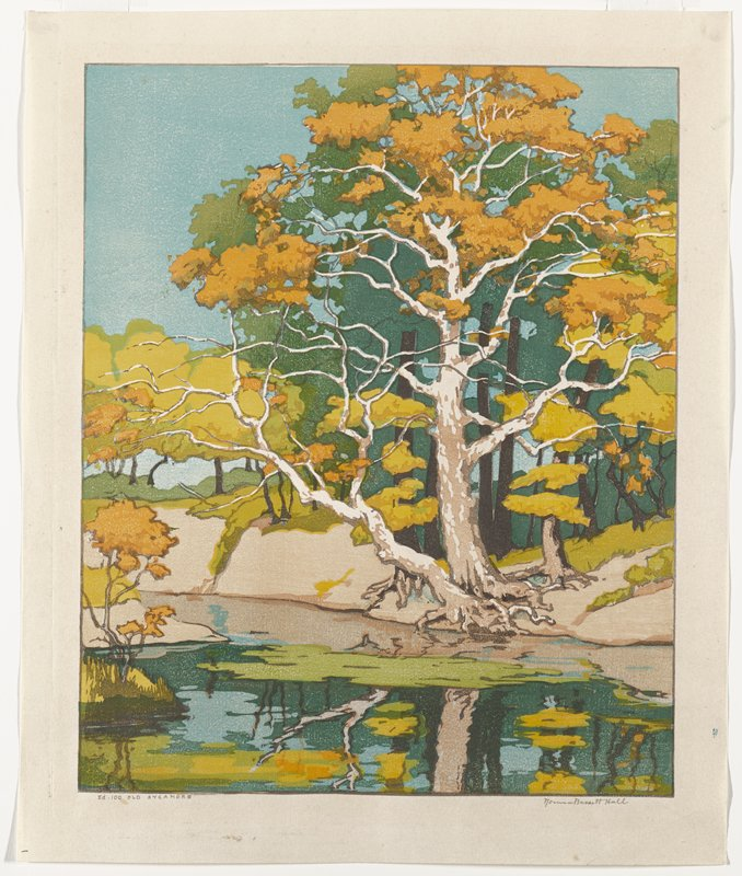 large old tree with orange leaves and tan bark on the opposite bank of still water in foreground at bottom; other green trees in background; blue sky