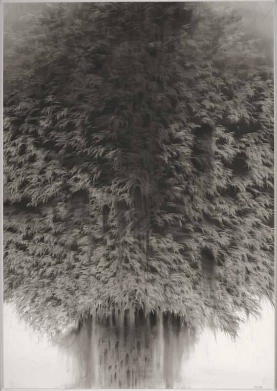 feathery, tree canopy-like expanse of foliage, with downward drip-like elements at bottom center; received in white frame