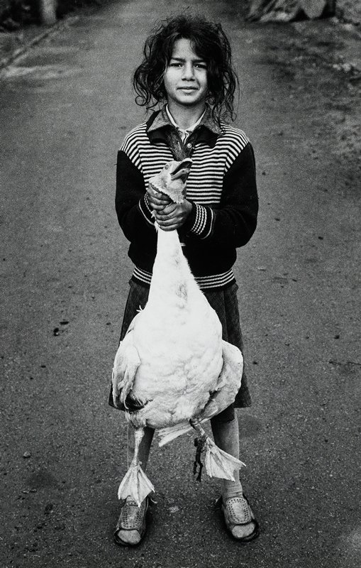 black and white; girl in striped sweater standing in road; holding white goose by its neck