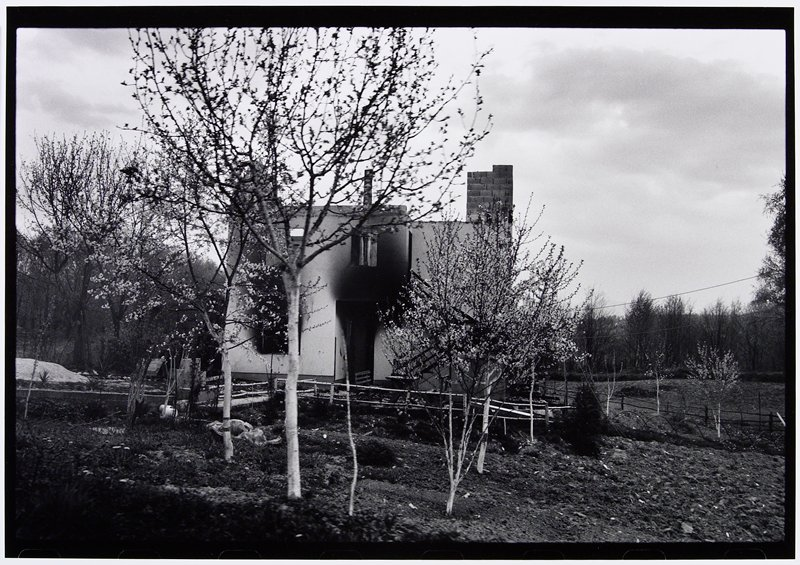 burnt-out house with grove of blossoming trees in front