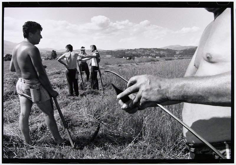 five men standing in field with scythes
