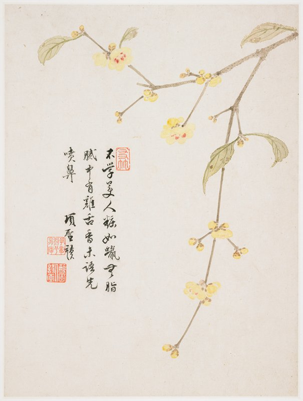 small yellow flowers and buds, with pink centers, on a long, delicate branch; inscription and 3 seals at left