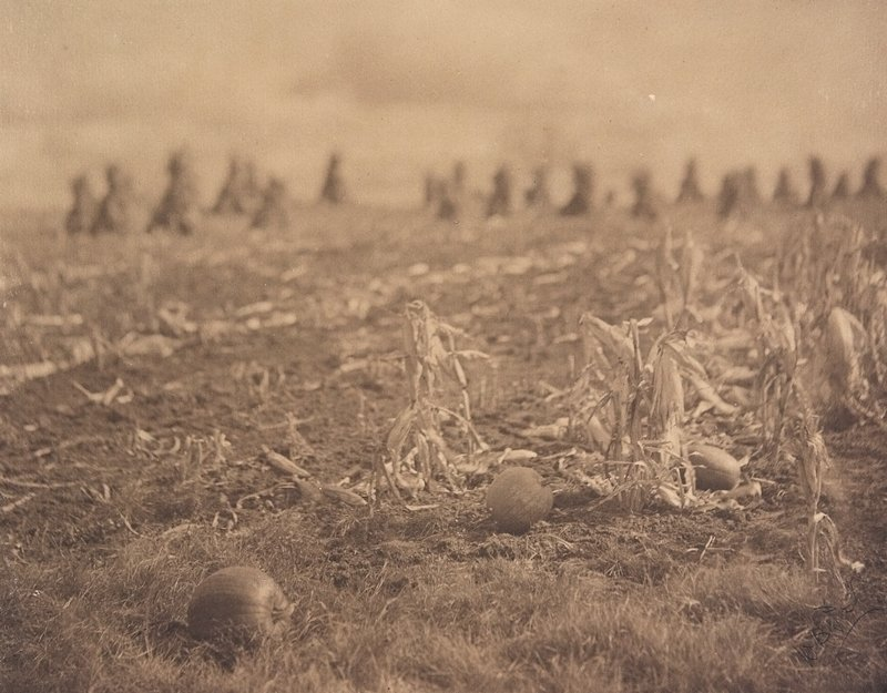 3 pumpkins in a field; cornstalk stacks in background; double mounted