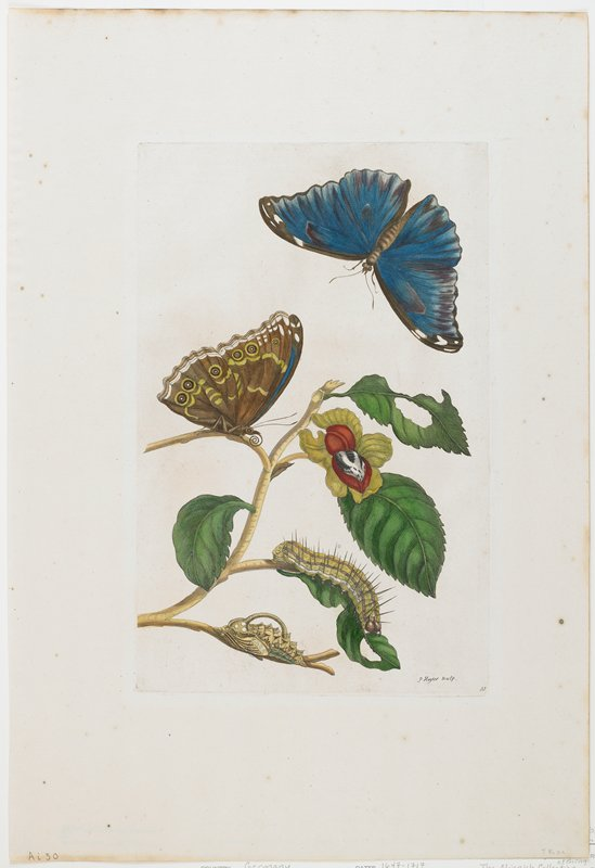 Plate 53