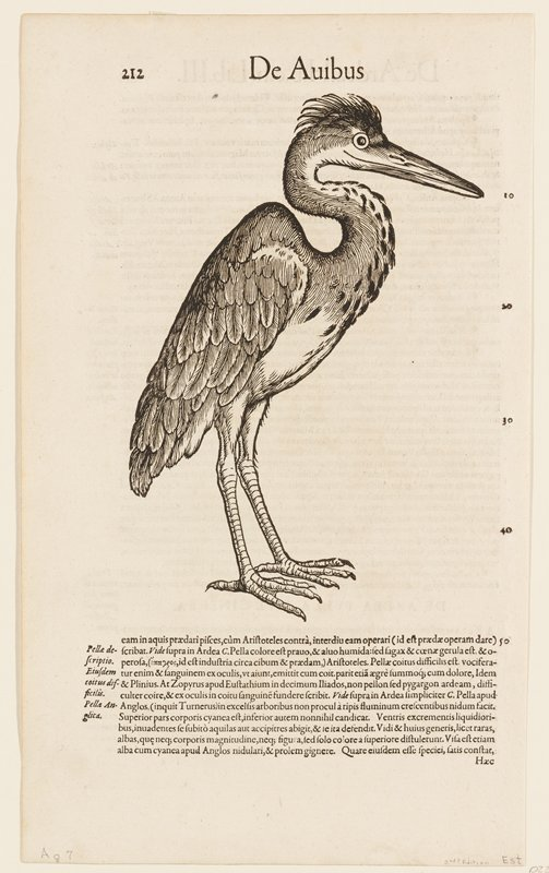 black and white (Heron)