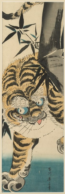 stepping orange tiger with tongue sticking out; grey bamboo trunk on R; off-white mat and light wood frame with plexi