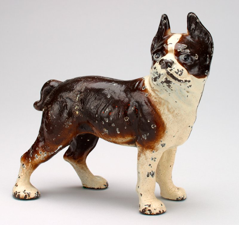 brown dog, white on face, back of head, front legs and all 4 feet; prick ears; flat face; coun slot in back of neck